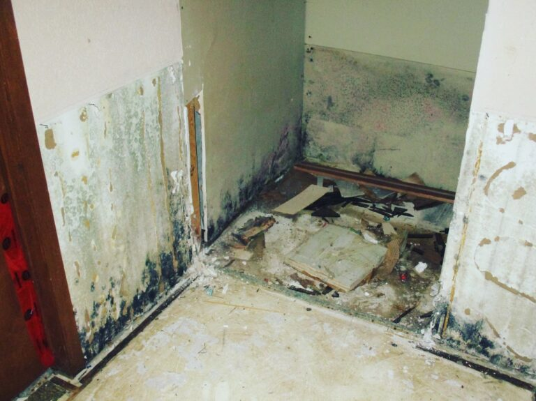 ogee_solutions_service_mold_pic_7